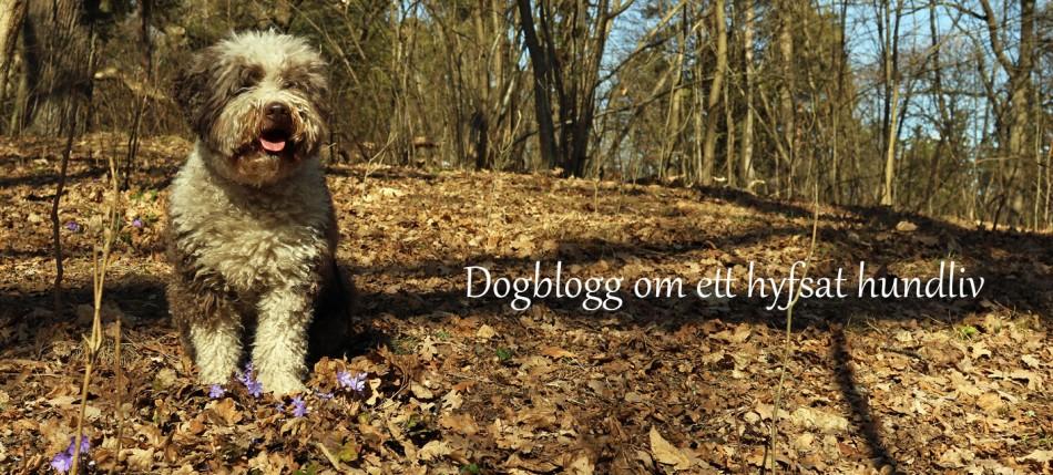 Doggblogg - om ett hundliv